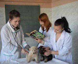 Курсы подготовки ветеринарных фельдшеров