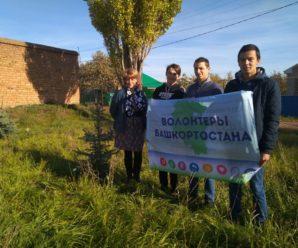 Акция «Зелёная Башкирия»